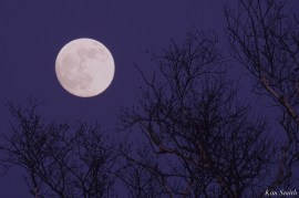 December Full Wolf Moon Gloucester Essex County copyright Kim Smith - 4 of 23