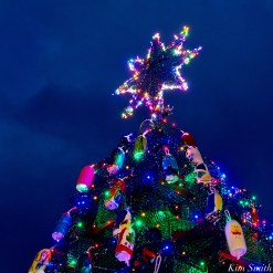 Lobster Trap Tree Lighting 2020 Gloucester Essex County Massachusetts copyright Kim Smith - 16 of 16