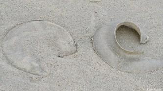 Moon Snail Egg Case Collars copyright Kim Smith - 2 of 6