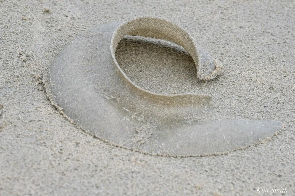 Moon Snail Egg Case Collars copyright Kim Smith - 3 of 6