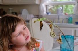 Monarchs emerging and Charlotte copyyright Kim Smith - 12 of 13