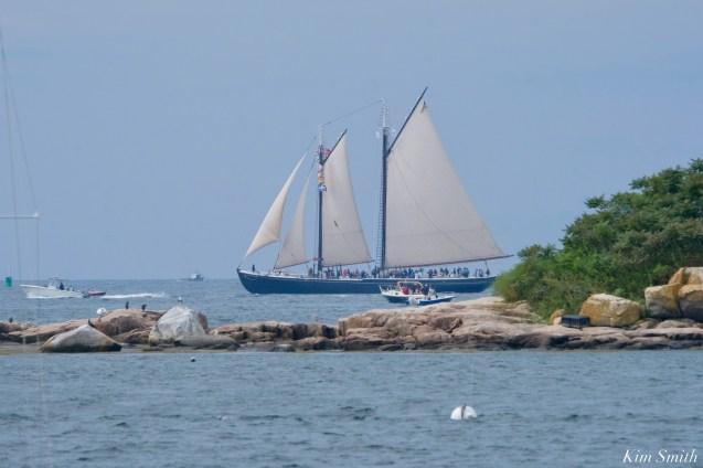 Schooner Parade of Sail Adventure Gloucester 2021 copyright kim Smith - 39 of 52