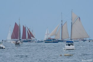 Schooner Parade of Sail Columbia Roseway Gloucester 2021 copyright kim Smith - 49 of 52