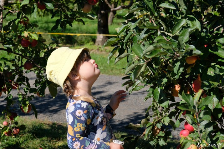 Russell Orchards Apple Picking copyright Kim Smith - 2 of 7