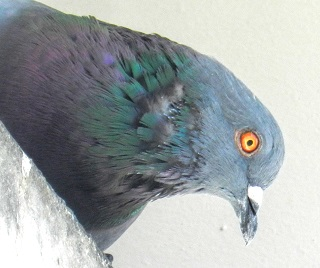 Referrer management - don't be pigeon-holed