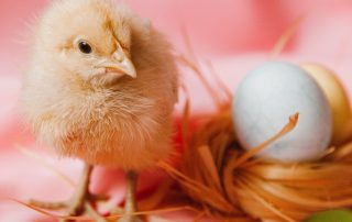 Beating Six Barriers to KAM – Chicken or Egg: Data, Protectionism, Starting point, Simplicity, Time and Training