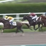 木村牧場育成馬ガッツィーソート、障害転向2戦目で初勝利を挙げる!