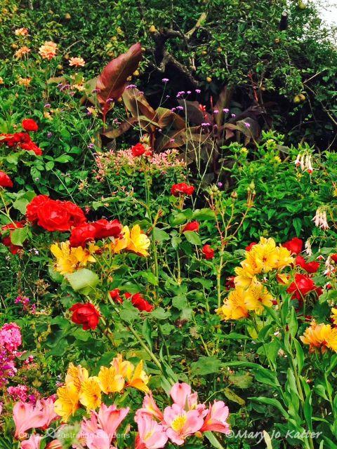 A tussle of hot-hued summer flowers.