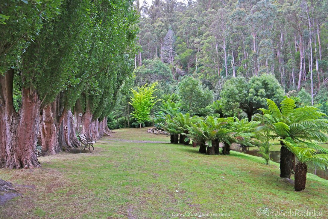 Poplars and tree ferns along the lakeside.