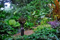 Tropical North Queensland Garden Tour  Our Australian Gardens