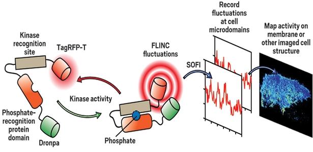 d0f3d yeni gelic59ftirilen biyosensc3b6rler lokalize hc3bccre aktivitesinin gc3b6rc3bcntc3bclenmesini kolaylac59ftc4b1rc4b1yor