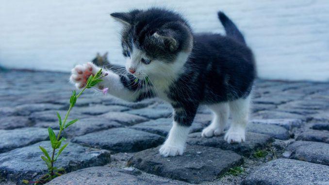 sagliginiz icin kedi sevin