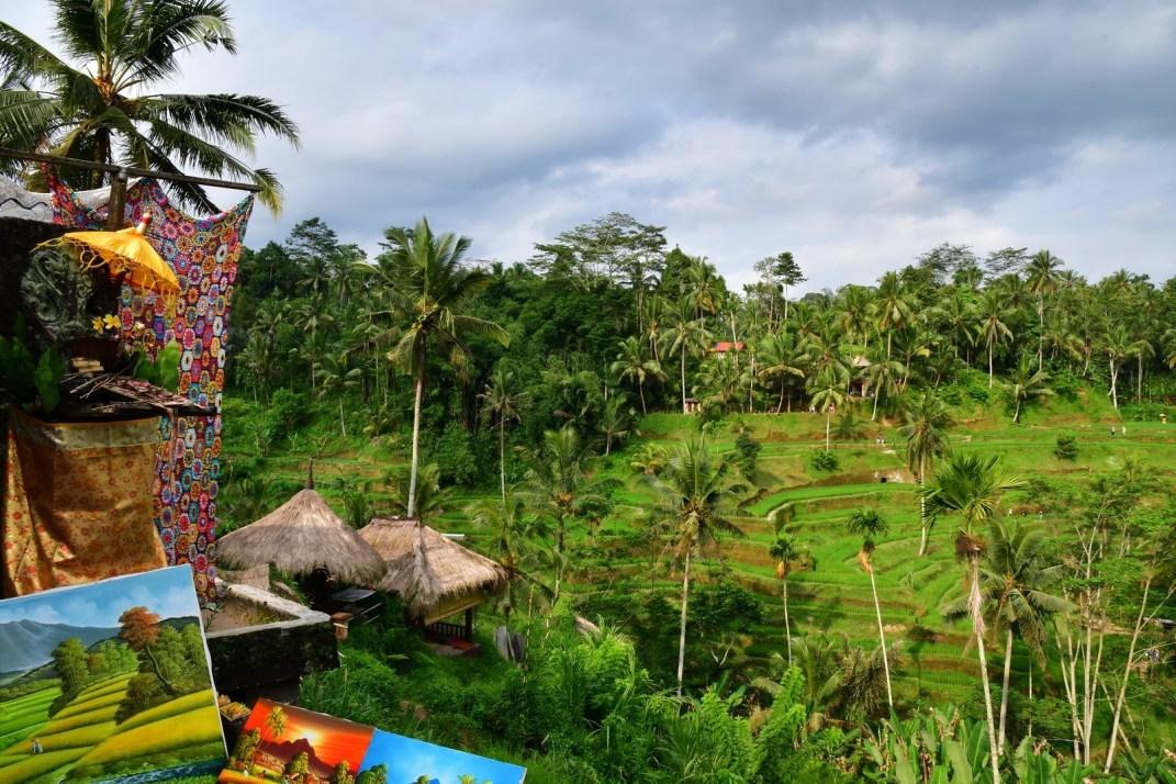 Tegalang Rice Terraces View