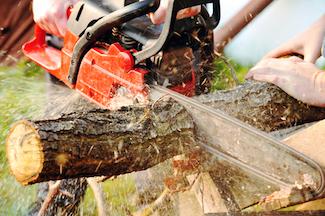 tree removal insurance indiana