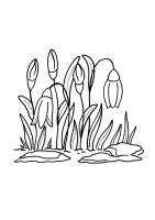 Schneeglöckchen Zum Ausmalen   Ausmalbilder und Vorlagen