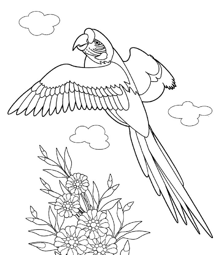Ausmalbilder Fr Kinder Pelikan