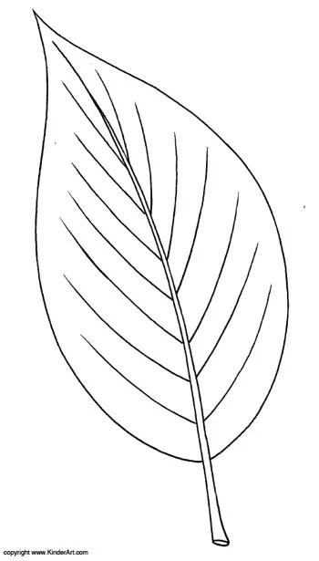 Ash Leaf Coloring Page. KinderArt.com