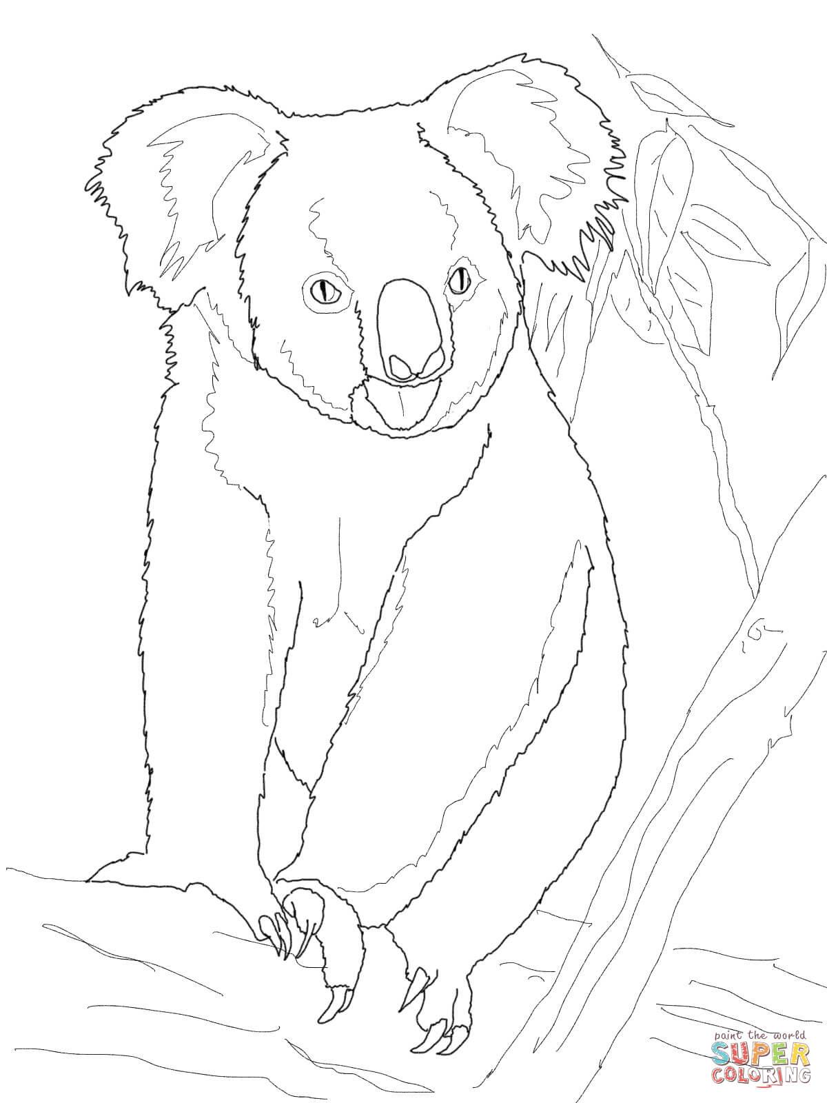 Koala Ausmalbild - kinderbilderdownload kinderbilder