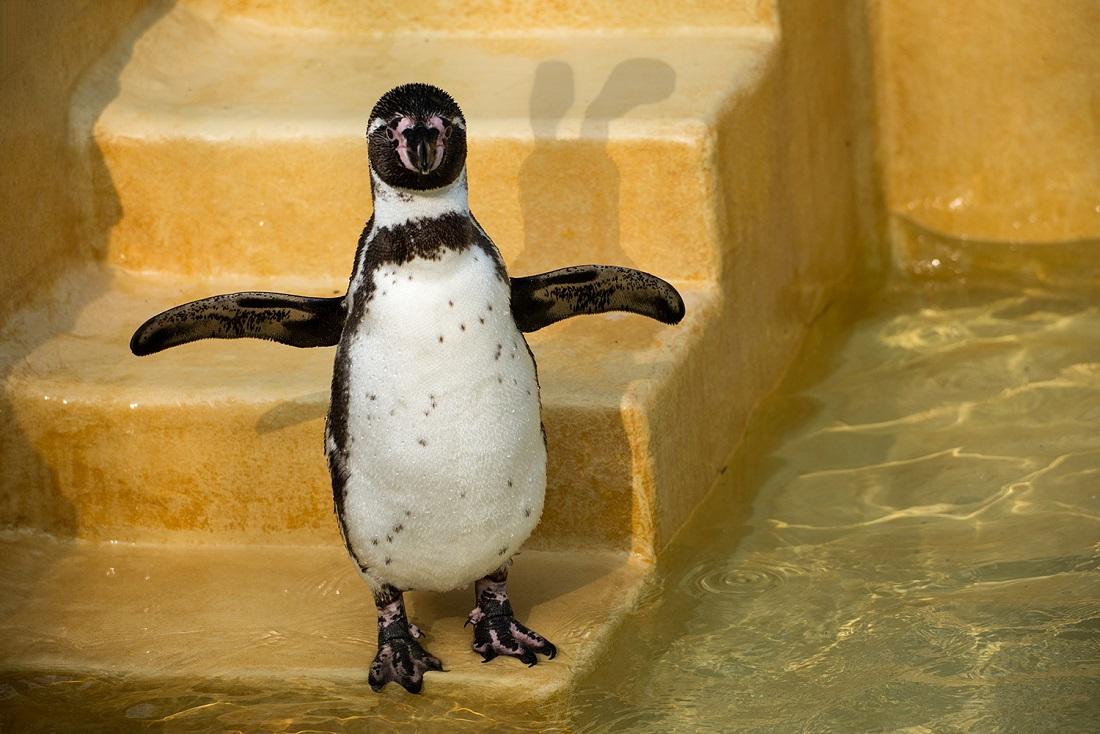 Ausmalbild Pinguin - Kostenlose Malvorlage bei Bilder Von