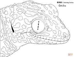 Gecko Malvorlage   kinderbilder.download   kinderbilder ...
