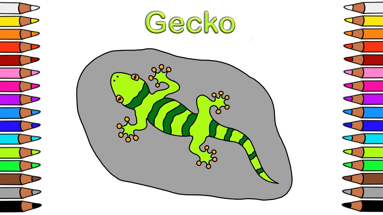 Gecko Malvorlage - kinderbilderdownload kinderbilder