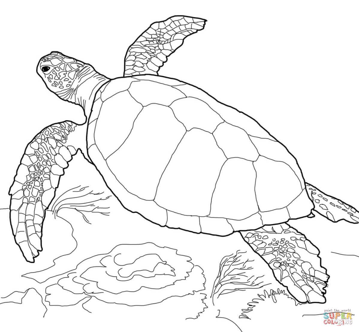 Malvorlage Schildkröte - kinderbilderdownload