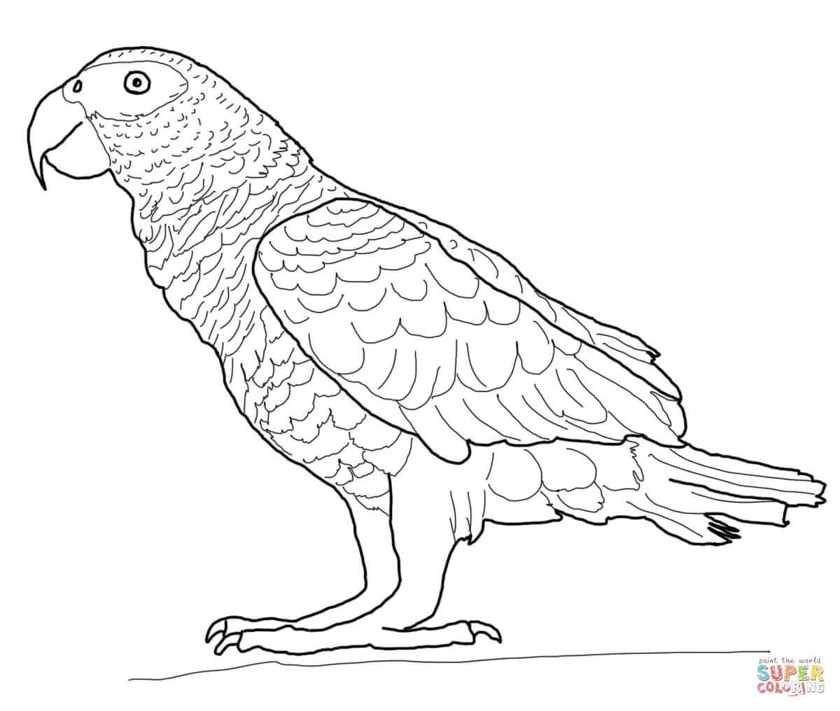 Malvorlage Papagei - kinderbilderdownload kinderbilder