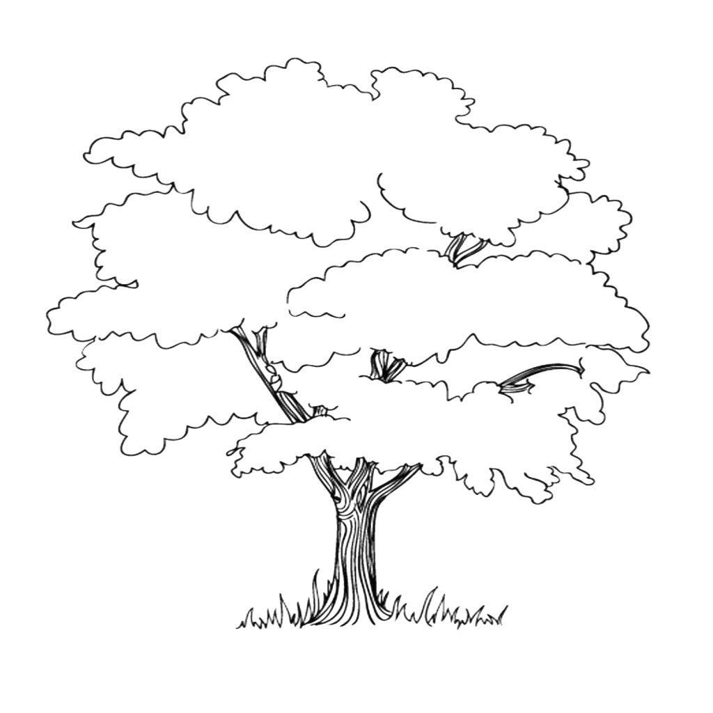 Malvorlage Baum - kinderbilderdownload kinderbilder