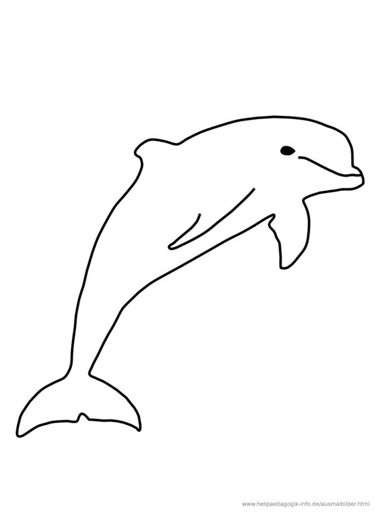 Delfin Malvorlage (Mit Bildern) Ausmalen Ausmalbilder