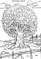 Malvorlage Baum   Ausmalbilder Kostenlos Herunterladen ...