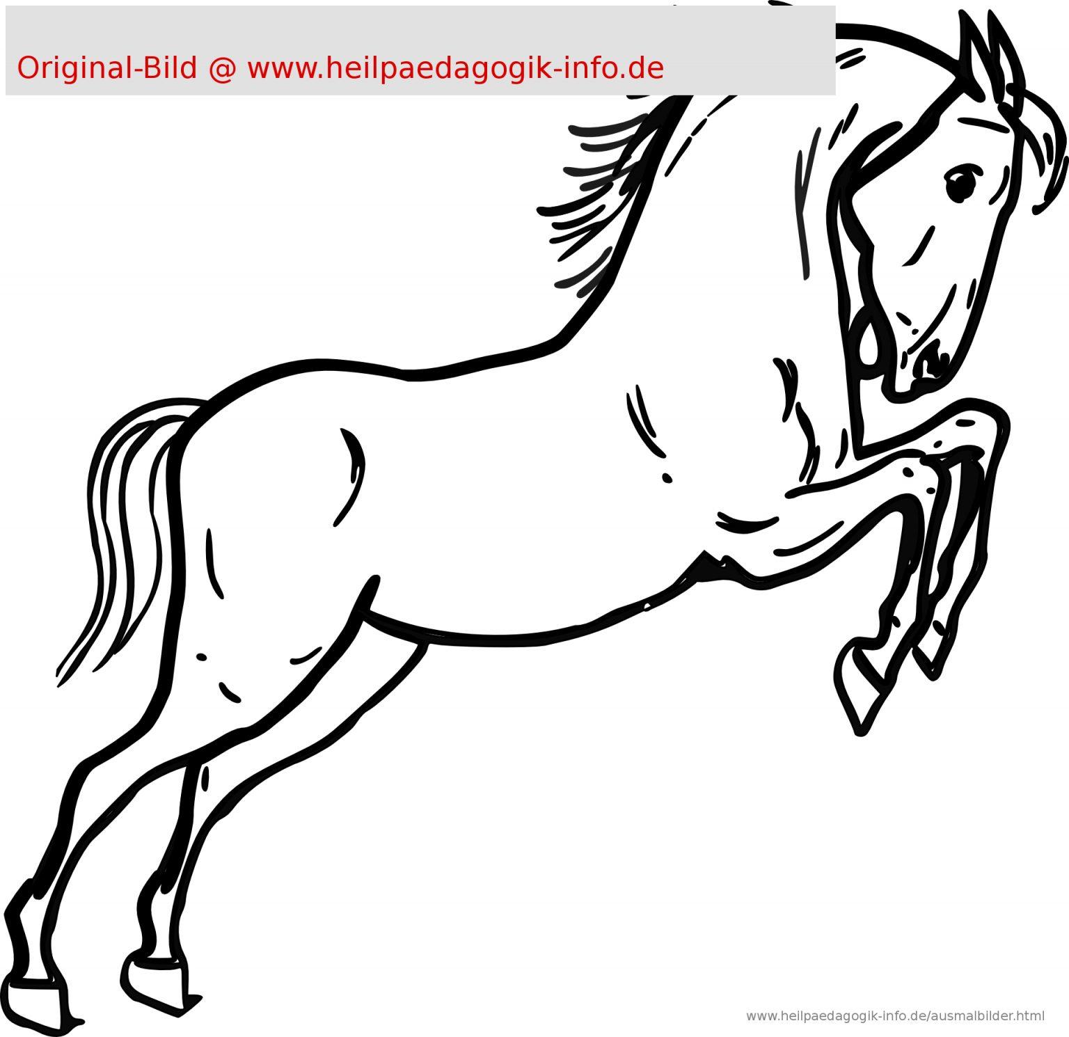 Malvorlage Pferdekopf