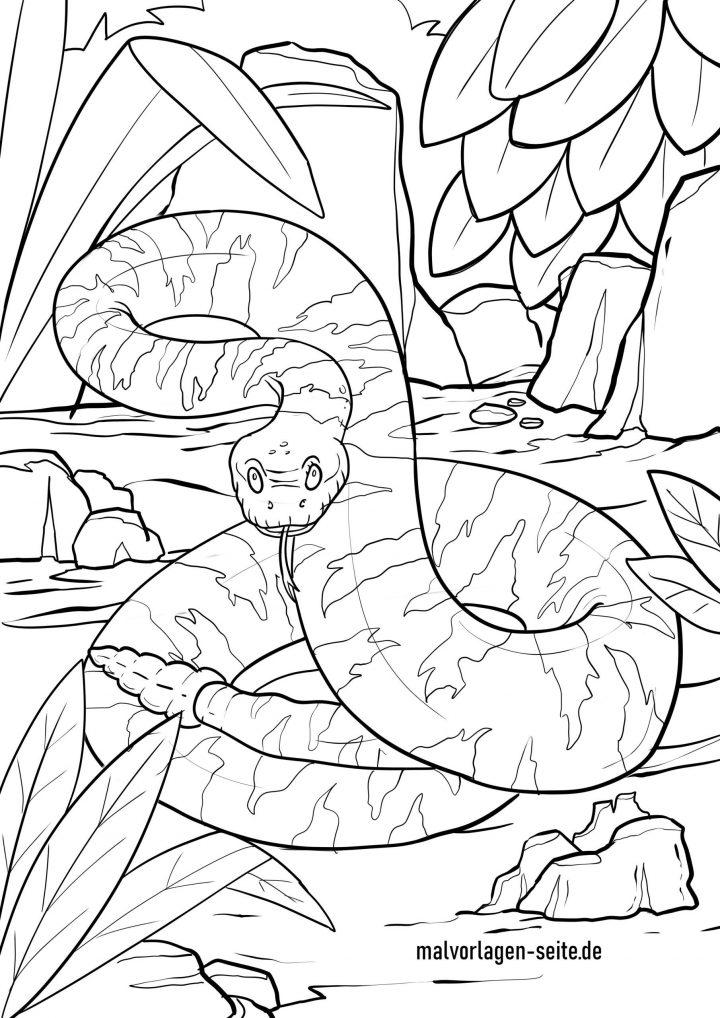 Malvorlage Schlange - Klapperschlange - Ausmalbilder