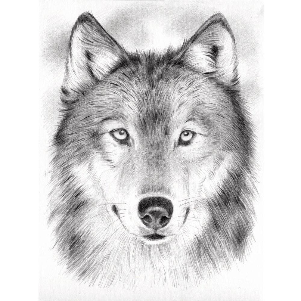 Ausmalbilder Wölfe Kostenlos - kinderbilderdownload