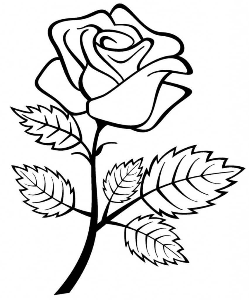 Rose Ausmalbilder Drucken Sie Die Blumenkönigin Online