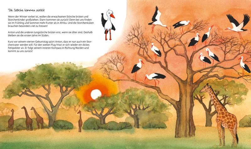 Störche im Winter in Afrika - Sachbilderbuch über Störche für Kinder
