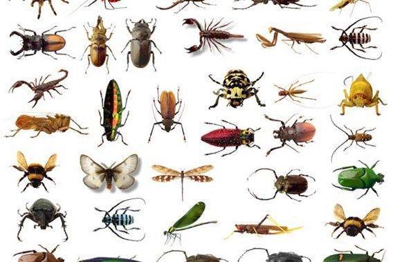 Voorschoolse Werkbladen Over Insecten 4