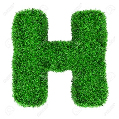 12346508-letter-h-made-of-grass-isolated-on-white-background-stock-photo