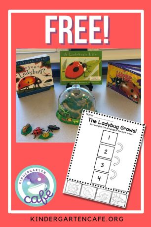 free ladybug life cycle activity