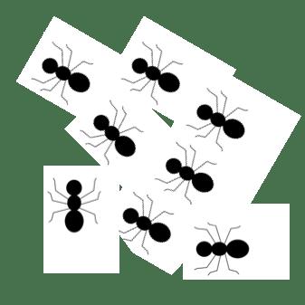 ants • Kindergarten Nation