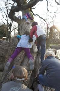 Hier geht es den Baum rauf um das fehlende Stück der Schatzkarte zu finden. Foto (c) kinderoutdoor.de