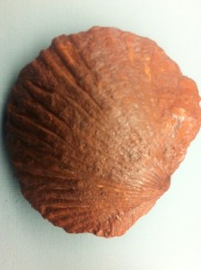 Das tolle beim Fossiliensammeln mit Kindern: Die Fundstücke halten ewig! Foto (c) kinderoutdoor.de