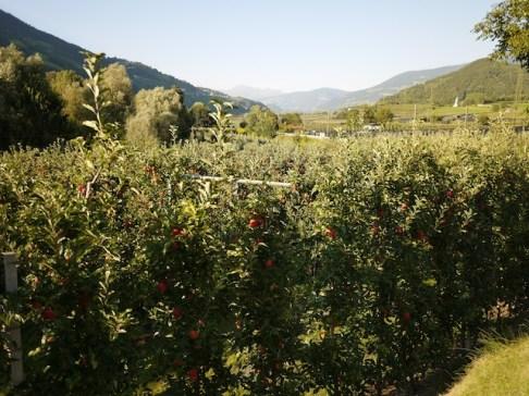 Mit Kindern wandern auf dem Apfelplateau von Südtirol. foto (c) kinderoutdoor.de