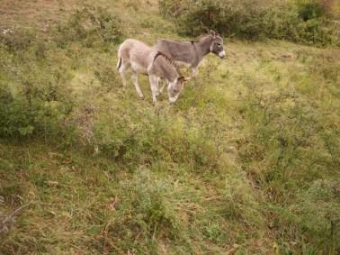 Die Pferde in der Camargue kennt jeder, doch die Esel im Kleinen Lautertal sind genau so süß. foto (c) kinderoutdoor.de