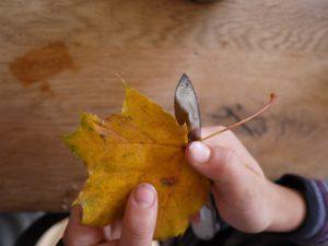 Mit Herbstlaub basteln: Zuerst kommen die Stiele von den Blättern weg. foto (c) kinderoutdoor.de