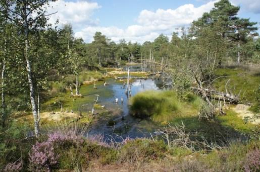 Ein Ausflugsziel für das ganze Jahr ist das Pietzmoor in der Lüneburger Heide. foto (c) kinderoutdoor.de