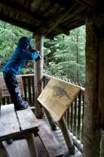 Bei der Familientour am Sattelberg haben die Kinder einen Aussichtsturm hinüber zur Planai. foto (c) kinderoutdoor.de