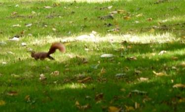 Im Eichhörnchenwald kommen diese Waldbewohner auf Euch zu und holen sich die Nüsse. Dazu müsst Ihr in die Hocke gehen und die Nüsse auf die flache Hand legen. Dann heißt es abwarten. foto (c) kinderoutdoor.de