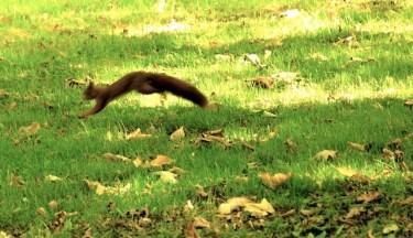Im Herbst lohnt sich eine Wanderung zu den Eichhörnchen. Da sind die wuselig unterwegs. foto (c)kinderoutdoor.de