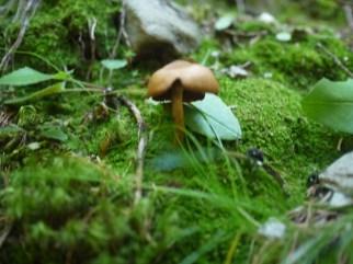 Wo ein Pilz ist, sind auch andere! Foto (c) kinderoutdoor.de