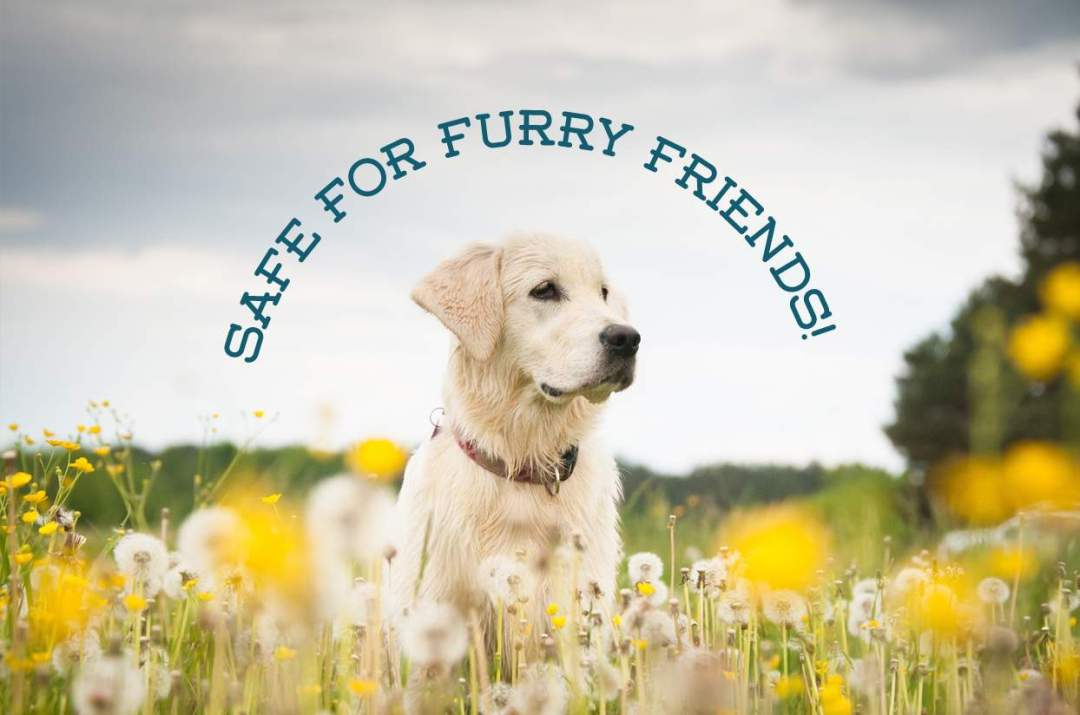 Non-toxic-pest-control-that-is-safe-for-pets